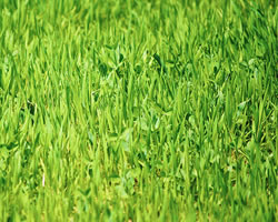Organic Lawn Care Promotes Healthy Soil