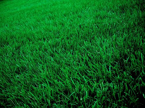 Greening Up Your Yard