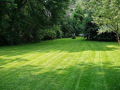 Organic Lawn Care Service Results