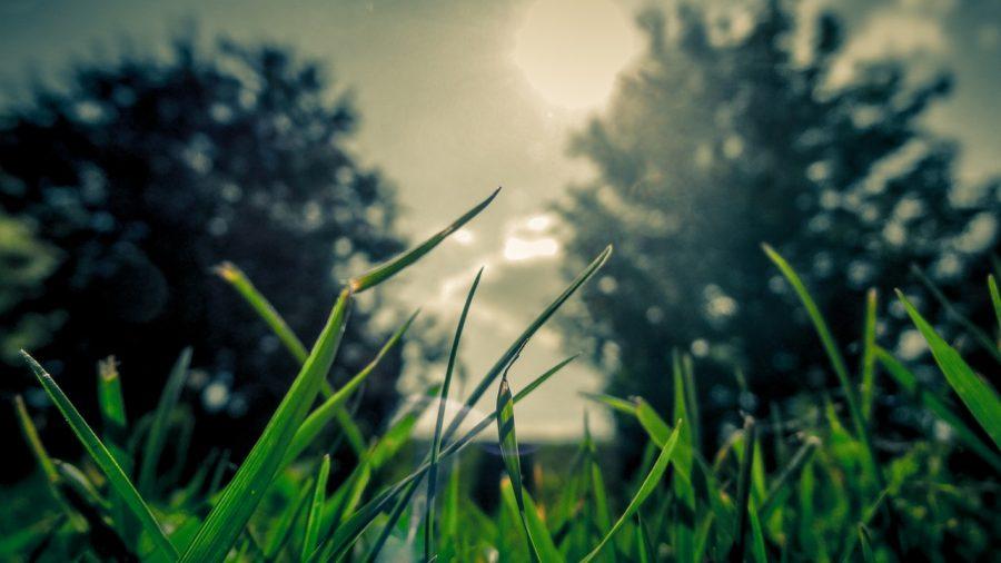 5 Preventative Lawn Care Tips