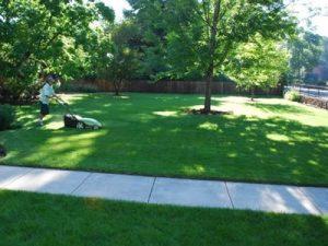 Clean Air Lawn Care Lawn Maintenance Tips