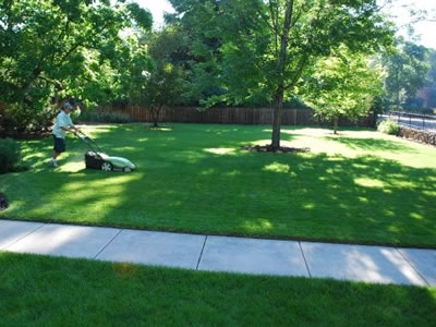 Preventative Lawn Care Maintenance Tips