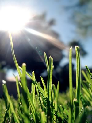 Solar Powered Lawn Care?