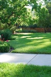 benefits of grass