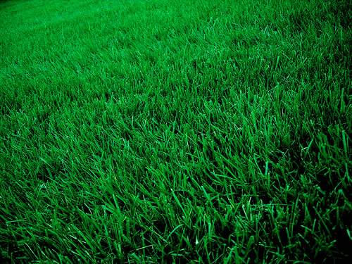 Best Franchise Opportunity: Five Ways a Clean Air Lawn Care Franchise Benefits the Environment