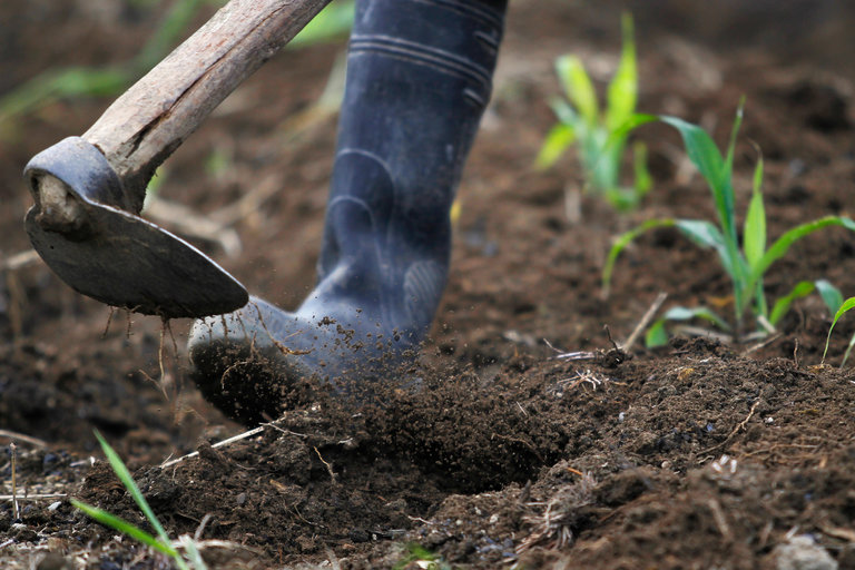 A Boon for Soil, and for the Environment