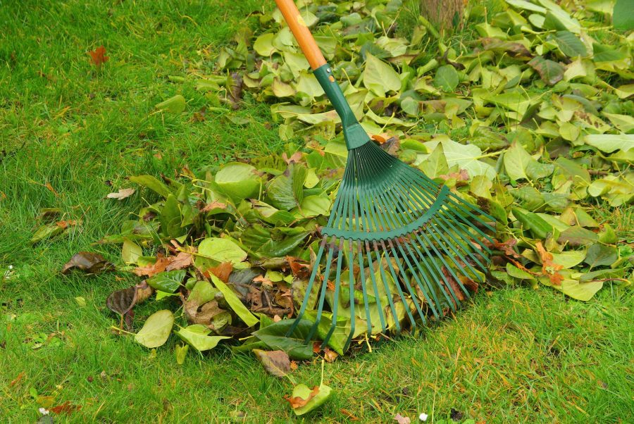 Leaf Blowers: A Landscaper's Testimony