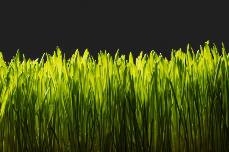The Dark Side of the Perfectly Manicured American Lawn: