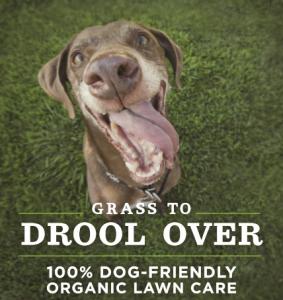Dog on a Pet Safe Lawn