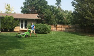 Organic Lawn Care Products