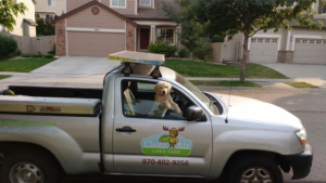 Lawn Care Truck with Dog