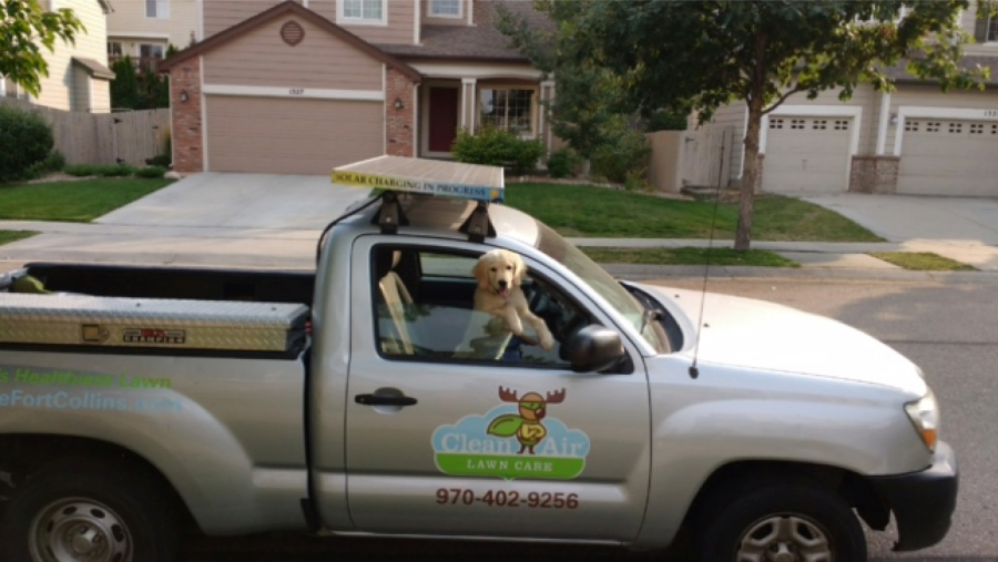 Lawn Pesticides and Pets