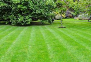 organic weed-free lawn