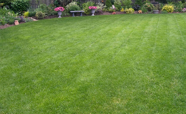 organic lawn care green franchise opportunity