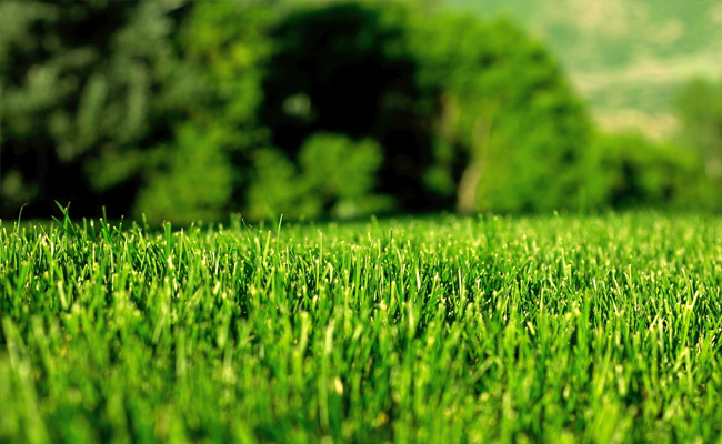 organic lawn by green franchise
