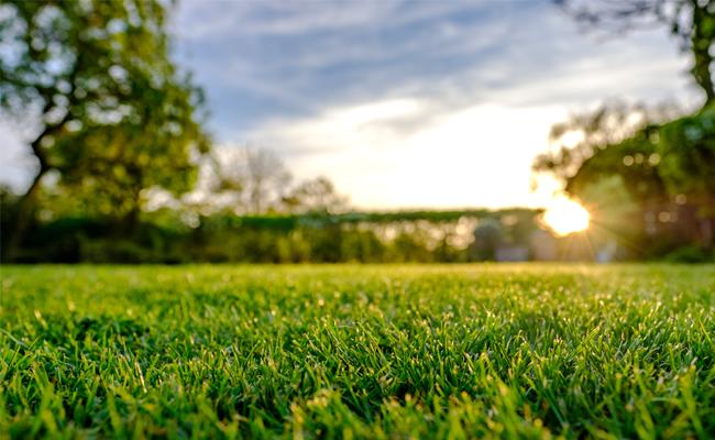 Organic Lawn Weed Control