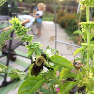 bee on flower in pollinator safe yard