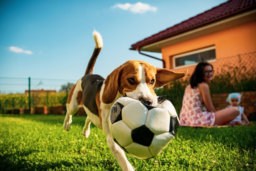 Why is Organic Lawn Care So Important?