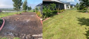 drought resistant grass zoysia sod