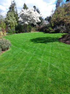electric lawn care seattle