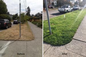 organic Seattle lawn care