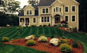 organic lawn care Clemsford