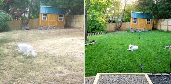 Pet friendly Asheville Lawn Care