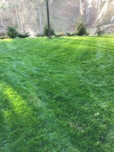 organic lawn care Asheville