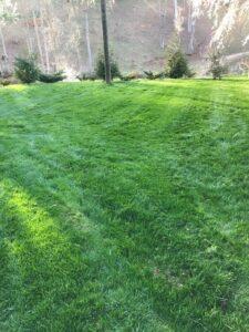 organic lawn care Asheville